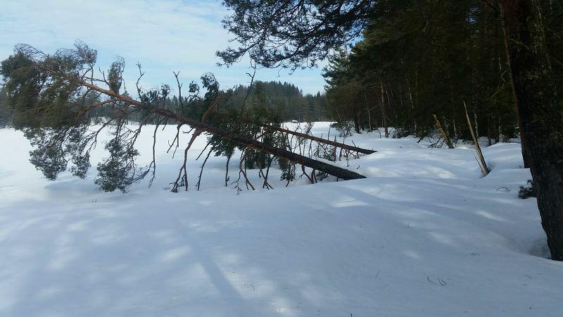Rydding av trær på Kringlevann